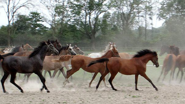 Horses On The Move, Przepęd, Return To The Stables