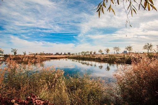 Sky, The Water, Blue Sky, Aquatic Plants