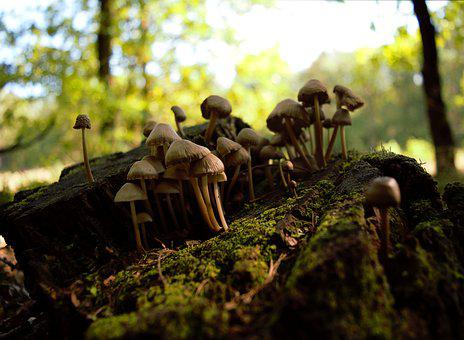 Autumn, Mushrooms, Stump, Forest, Litter, Nature, Trunk