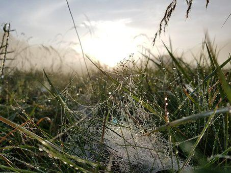 Sunrise, Dew, Nature, Morning, Summer, Grass, Meadow