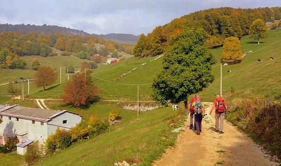 Excursion, Walk, Trail, Mountain, Autumn