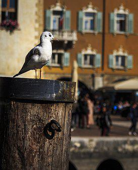 Seagull, Seevogel, Water Bird, Sea, Close, Birds, Port