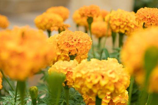 Flowers, Yellow, Orange, Blossom, Bloom, Plant
