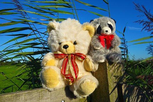 Animal, Stuffed Animal, Bear, Stuffed Bear, Teddy Bear