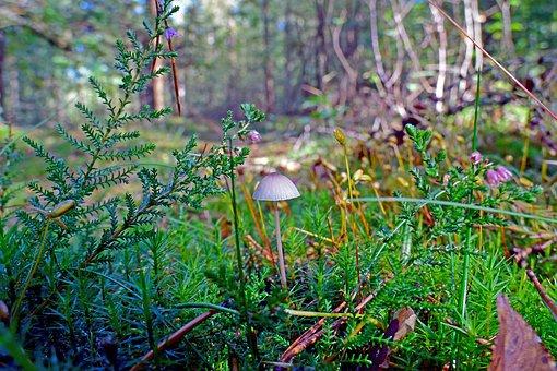 Mushroom, Hamid, Fungal Species, Autumn Mushroom