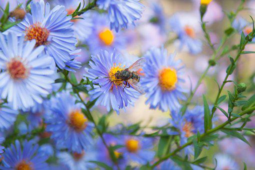 Flowers, Bee, Bush, Nature, Spring, Insect, Summer