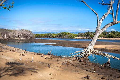 Creek Mouth, Tide Out, Tree Swing