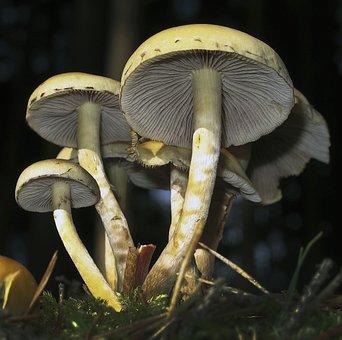 Mushrooms, Lamellar, Mushroom Group, Disc Fungus