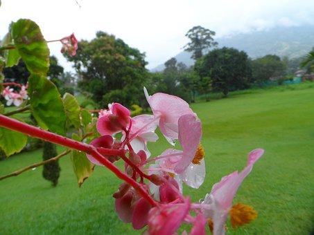 Nature, Flowers, Pl, Flora, Plants, Garden