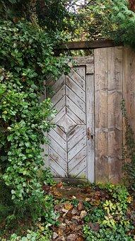 Door, Wooden Door, Garden, Wild, Weathered Ivy, Plant