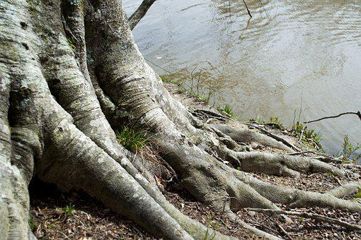 Tree, Water, Root, Nature, Spring, Green, Environment