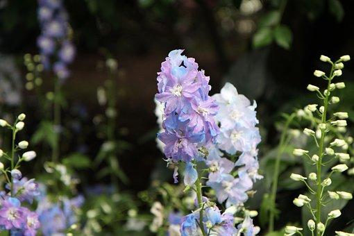 Jeju Island, Botanical Garden, Rare Flower, Garden