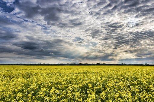 Clouds, Countryside, Daylight, Field, Flower, Landscape