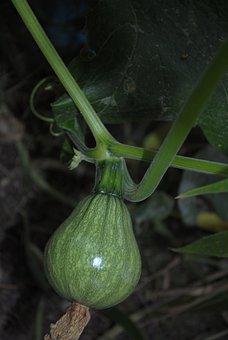 Zucchini, Vegetable, Market
