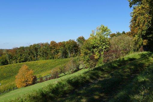 Autumn, Sun, Edge Of The Woods, Nature