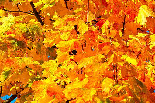 Autumn, Leaves, Fall Foliage, Golden Autumn, Nature