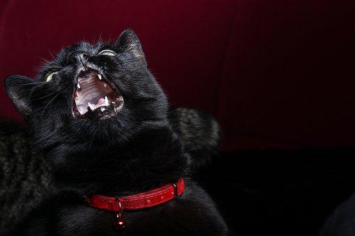 Cat, Pet, Black, Evil