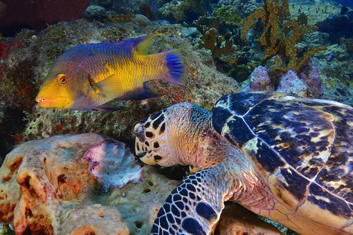 Fish, Diving, Seabed, Reef