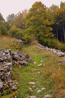 Trail, Stones, Grass, Sassi, Forest, Autumn