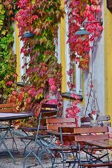 Wine Partner, Vine, Autumn, Autumn Sun, Sunny