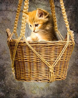 Animals, Cat, Pet, Young Cat, Small Cat, Basket, Watch