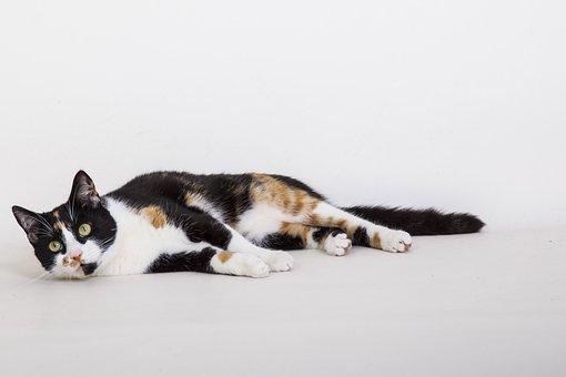 Cats, Animal, Relax, Cat, Pet, Animals, Nature, Sweet