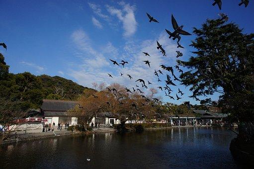 Tsuruoka Hachiman-gu Shrine, Bird