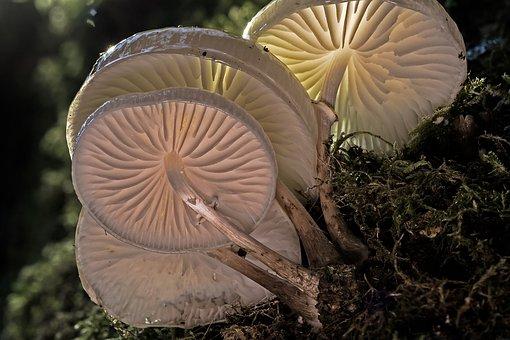 Book Mucus Oyster Mushroom, Mushroom, Tree Fungi
