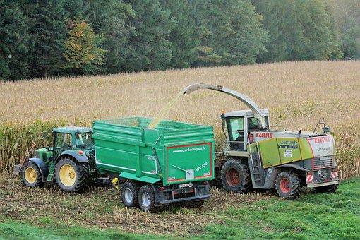 Harvest, Corn, Autumn, Corn On The Cob, Field