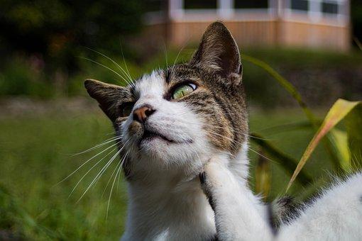 Animal, Feline, Cat, Pet, Domestic, Scratching, Tuned