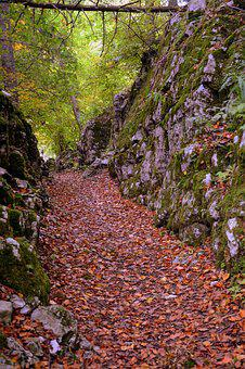 Trail, Stones, Autumn, Leaves, Sassi, Excursion