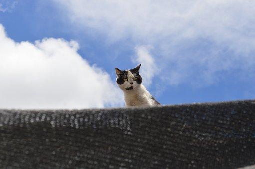 Cat, Roof, Feral, Wild, Pussycat, Male, Feline, Animal