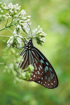 Taipei Botanical Garden, Flower, Butterfly, Adopt Honey