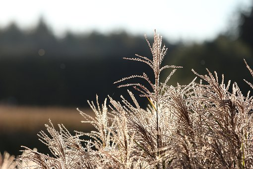 Grass, Beautiful, Nature, Grasses, Landscape, Meadow