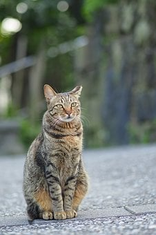 Hou Cave, New Taipei City, Cat, Day