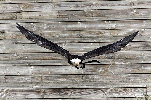 Bird, In Flight, Animal