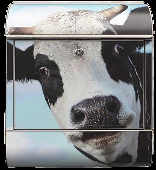 Mailbox, Letter Boxes, Cow, Portrait, Post