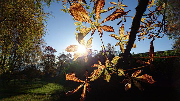 Autumn, Autumn Leaves, Sunshine, Rays Of Sunshine