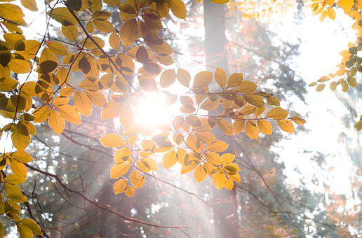 Sun, Burst, Forest, Light, Sunlight, Shine, Ray
