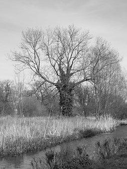 Bare Tree, Ivy, Autumn, Trunk, Branches, Winter