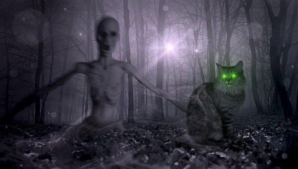 Fantasy, Forest, Zombie, Cat, Creepy, Halloween