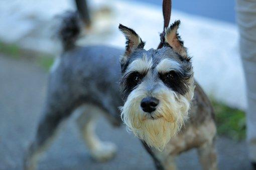 Dog, Long Hair, Black, Ear