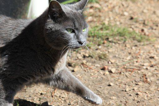 Cat, Animals, Farm, Tabby, Grey, Outdoors, Quote