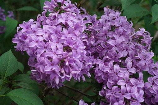 Hope, Beauty, Calm, Purple Flowers, Botanical Garden