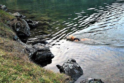Lake, Autumn, Wet Dog, A Friend Of Man, Rock, Fun