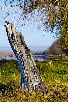 Old Stump, Village, Autumn, Morning, Landscape, Nature