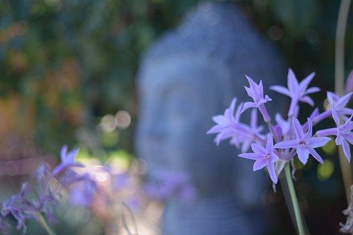 Buddha, Depth Of Field, Lavender, Flowers, Peace