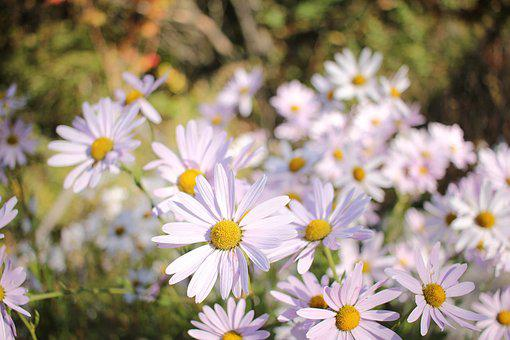 Flowers, White Flower, Clean, Pure, Nature