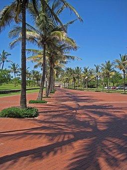 Boulevard, Palm Trees, Paving, Row, Sky, Blue, Coastal