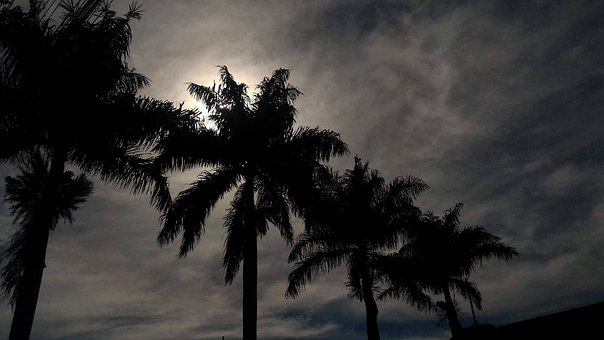 Coconut Tree, Sky, Nature, Beach, Tree, Landscape